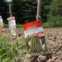 Planting Your Own Vegetable Garden