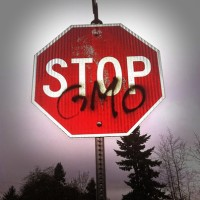 The Dangers of Eating GMO Food – Stop GMO