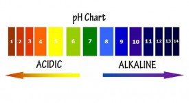 Human Body pH – Know the Power of pH